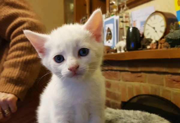 Kittens for sale ready to go 08/02/20