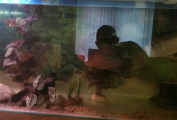 Tank with fish