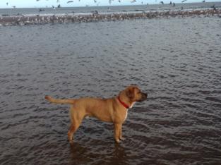 Weekend dog walker and boarding