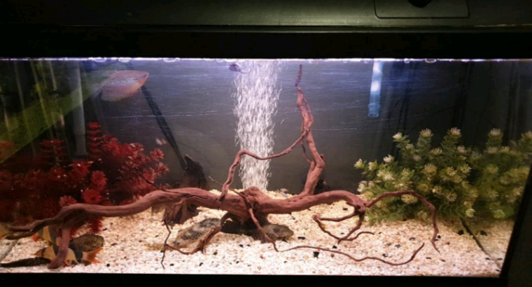 Rehoming fish in Enfield