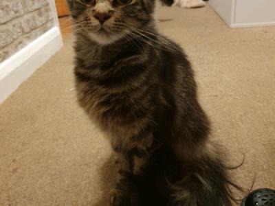 Lost cat £50