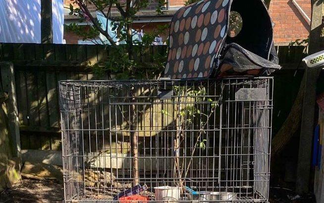 Furry Animal Medium sized Animal cage