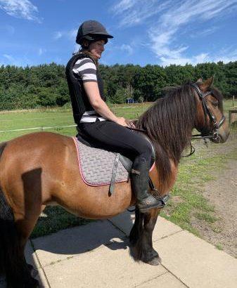 Stunning 12hh mare