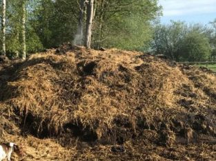 Free horse manure