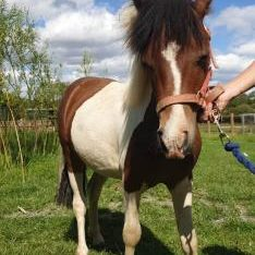 Yearling Colt £400 ono