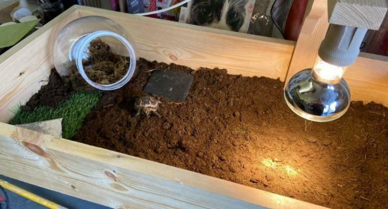 Tortoise home – horse field