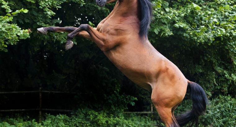 Horses are Beautiful