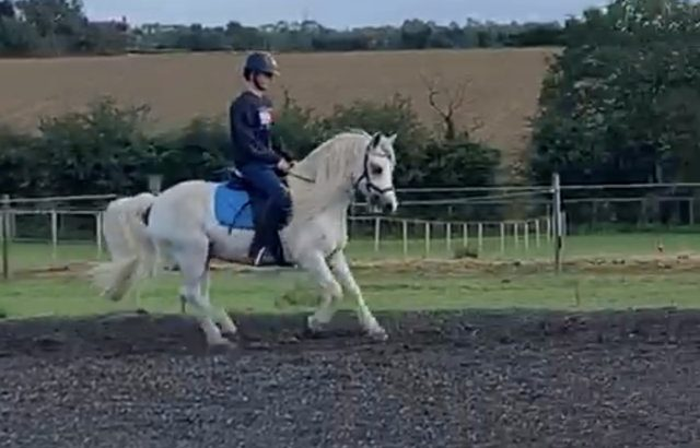 Mothers dream pony! £4000 no offers