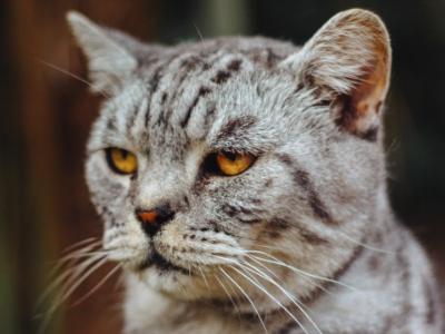 Coronavirus and cats