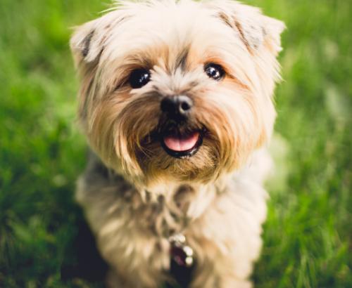 Dogs and coronavirus