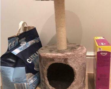 Kitten/Cat supplies
