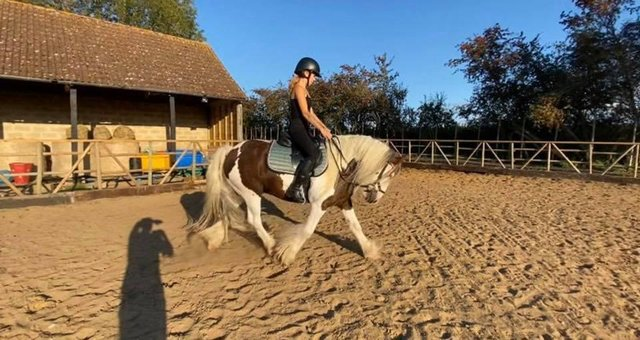 Stunning Bombproof 7 year old Cob Gelding For Sale