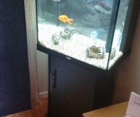 Juwel lido 120 black tropical marine cold water fish tank aquarium (Drivery installation )