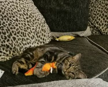 Our beautiful young Mylo needs a good and loving home