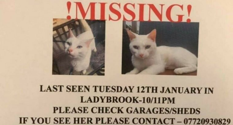 MISSING OUR ANGEL IN WEST BELFAST