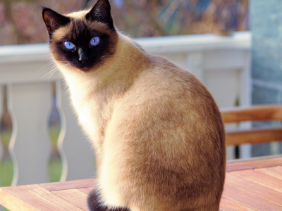 Top 5 cats in the world